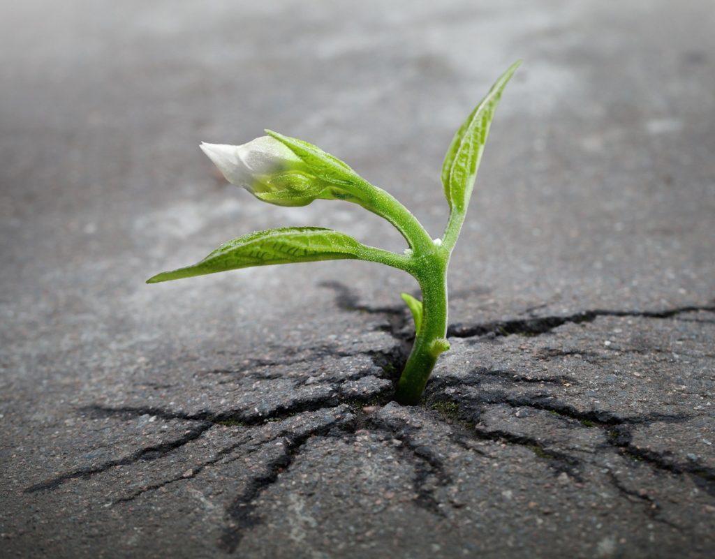 La forza della vita vince ogni ostacolo